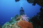 Rifflandschaft mit Taucherin