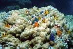 Spiralroehrenwuermer auf einer Koralle