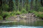 Biberbau am Flußufer
