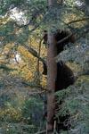 Drei kleine Bären sind auf einen Baum geklettert