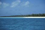 Rußseeschwalbe in Inselnähe