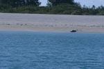 Hawaiianische Moenchsrobbe erholt sich am Strand