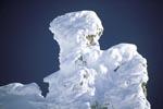 Verschneite Bergkiefer im Karwendel