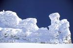 Tiefverschneite Latschenkiefern im Karwendel