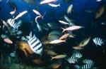 Fischkonzentration am Shark Reef