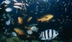 Taucher und bunte Fische am Shark Reef