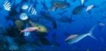 Bunte Korallenfische am Shark Reef