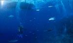 Dekostopp unter dem Tauchboot