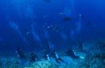 Taucher sind bereit zur Haibeobachtung