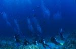 Taucher warten auf Haie am Shark Reef