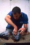 Dr. Juerg Brunnschweiler präpariert einen Fischkopf