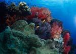 Weichkorallen sind ein auffallender Riffbestandteil