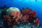 Weichkorallen sind ein absoluter yey catcher im Riff