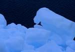 Arktisches Packeis am Cape Anne