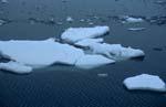 Treibende Eisschollen am Cape Anne