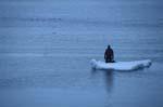 Schnorchler auf Eisscholle am Cape Anne