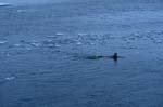Schnorchler im arktischen Wasser