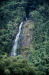 Urwald Wasserfall