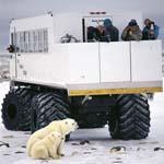 Eisbaerenfamilie, Tundra-Buggy und Touristen